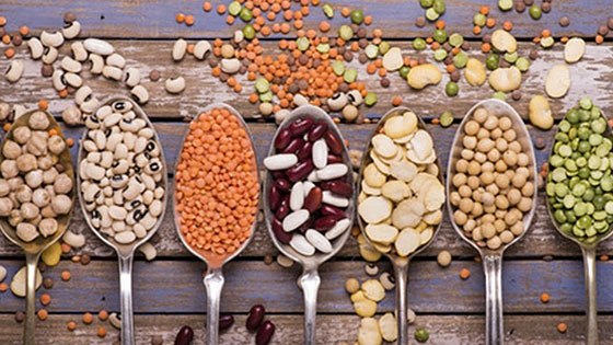 Les légumineuses : jusqu'à 20 % de teneur en protéines végétales