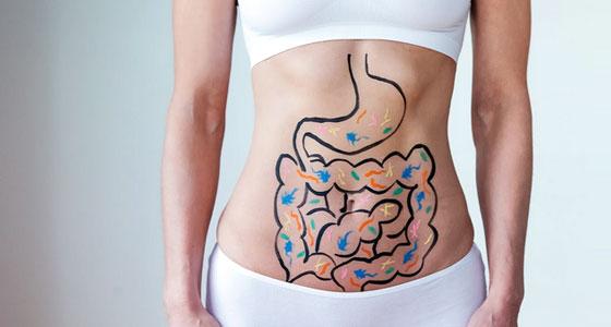 Les fibres : les agents de sécurité de votre intestin